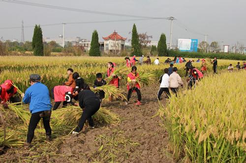 温岭:体验农耕 收获快乐